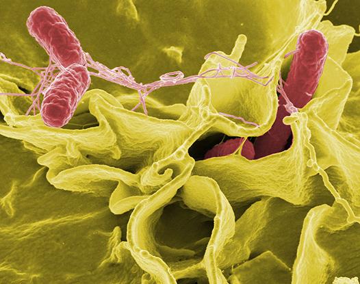 Eliminar microorganismos con ozono